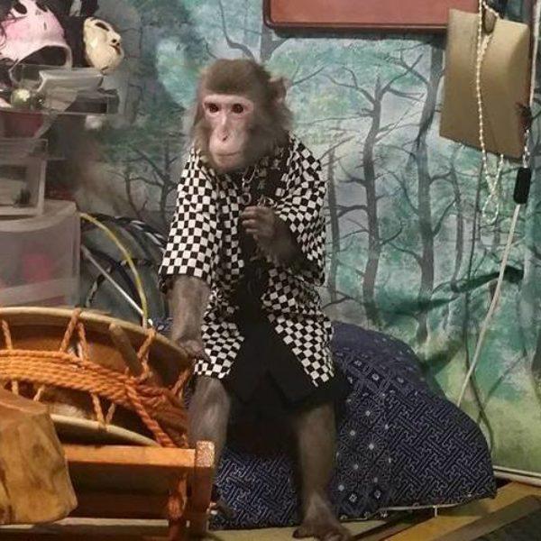 ristorante scimmie