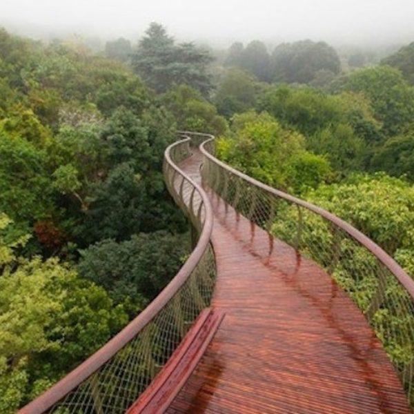 Kirstenbosch-Centenary-Tree-Canopy-Walkway-638x425