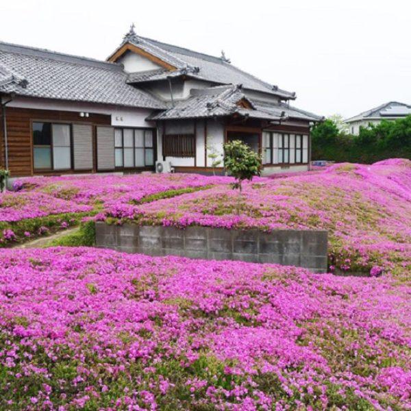 giardino giapponese shintomi
