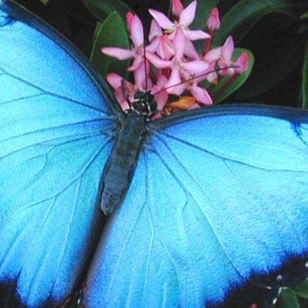 farfalle-costa-rica