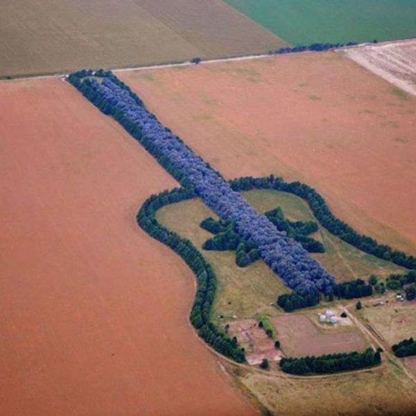 bosco chitarra