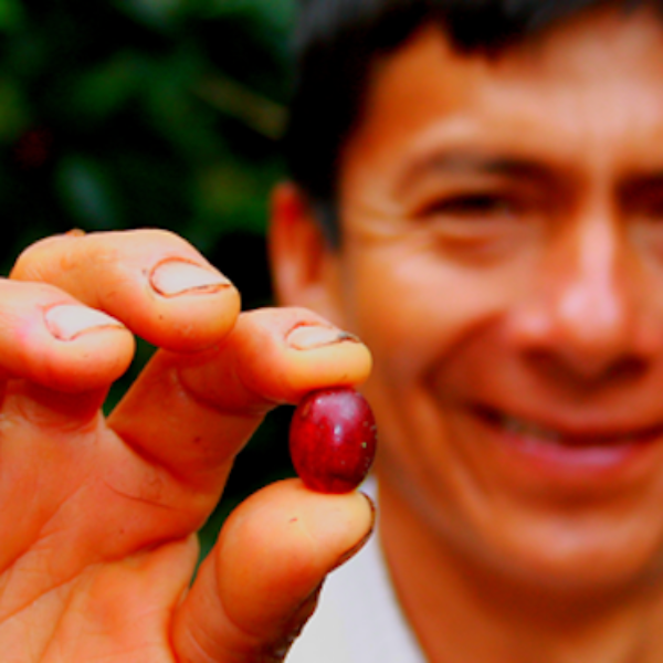ag-Telesfero-Gamonal-holding-coffee-bean-Peru-Rainforest-Alliance