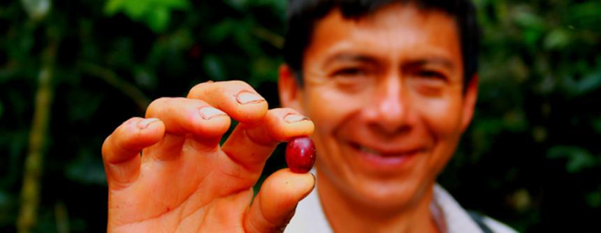 Il Perù in un sorso di caffè: le tante sfumature della bevanda più amata