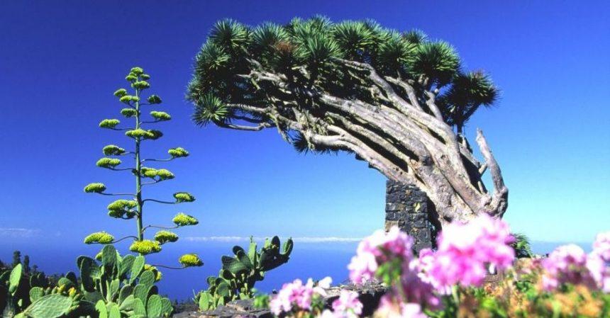 La Palma, Canarie: per il mare ma anche per il cielo e le sue stelle