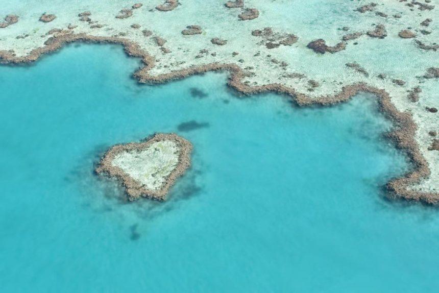 Australia: la Grande Barriera corallina è stata dichiarata morta