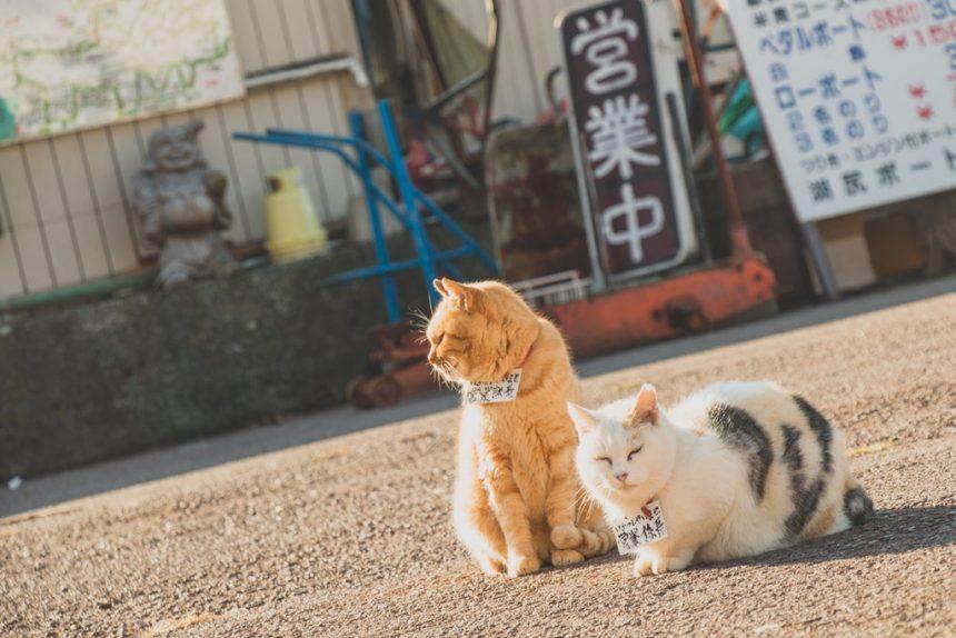 Le città dove vivono solo i gatti: dall'Asia all'Italia nel segno dei felini