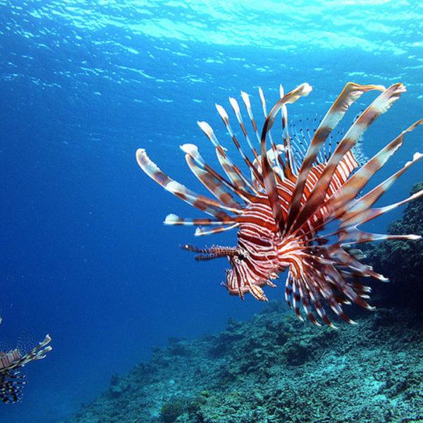 Diving-at-Kerama-Islands-Unbelievable