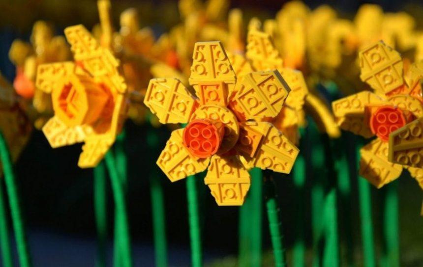 In Gran Bretagna fioriscono i narcisi, ma sono di Lego