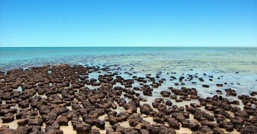 Shark Bay, in Australia: nuotando nel mare blu si torna indietro nel tempo