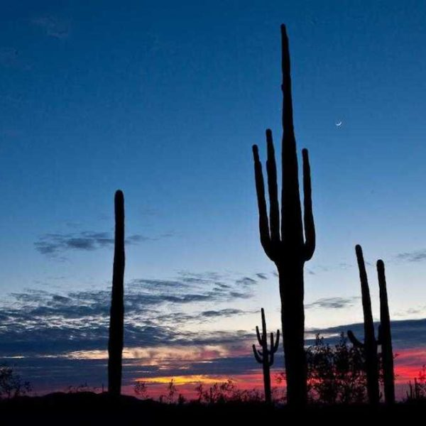 Sonoran_Desert_National_Monumen