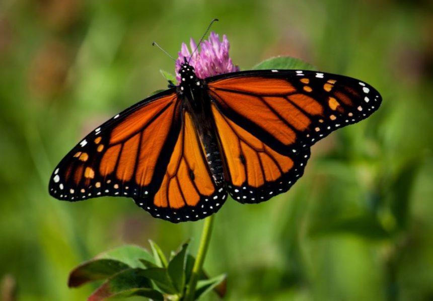 Messico, un tour dove l'unico rumore è il battito d'ali di milioni di farfalle