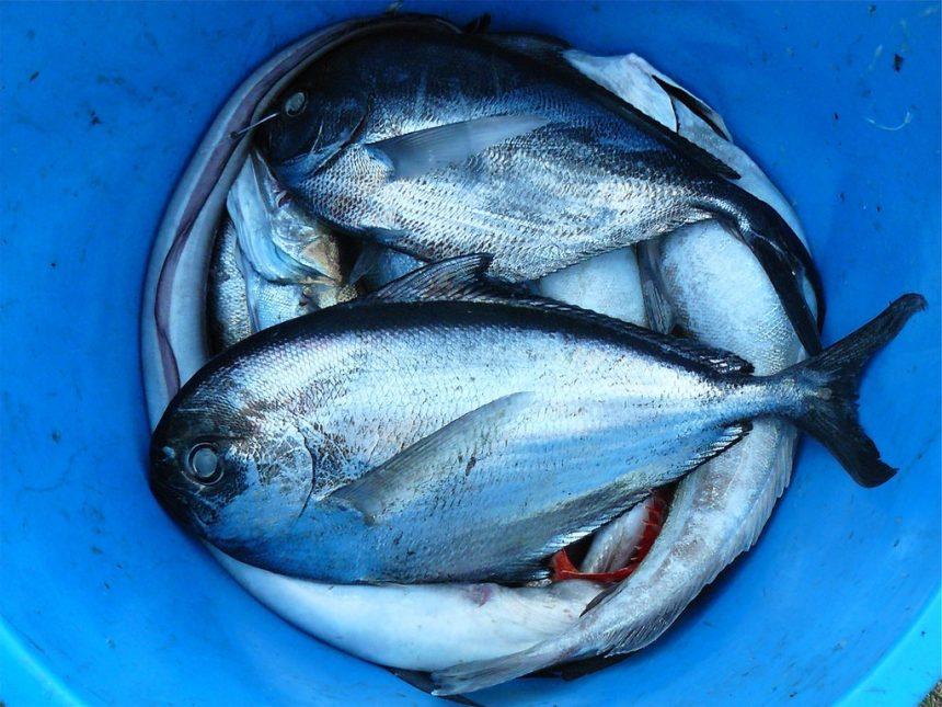 Il mercato del pesce di Tokyo potrebbe diventare un parco a tema cibo