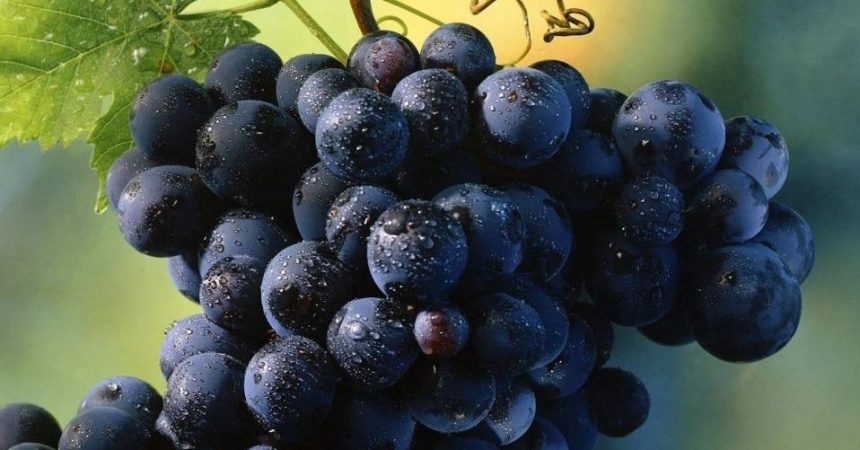 Le strade del vino in Sicilia: itinerari tra vigneti e città storiche