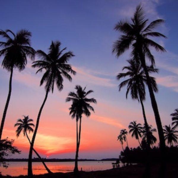 palms_500