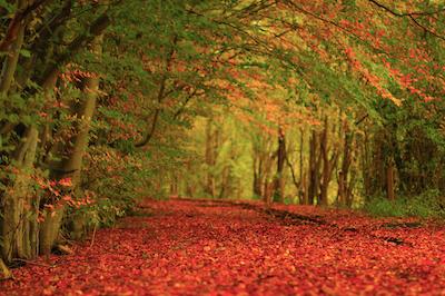Foliage, suggestioni d'autunno in giro per il mondo: dove andare