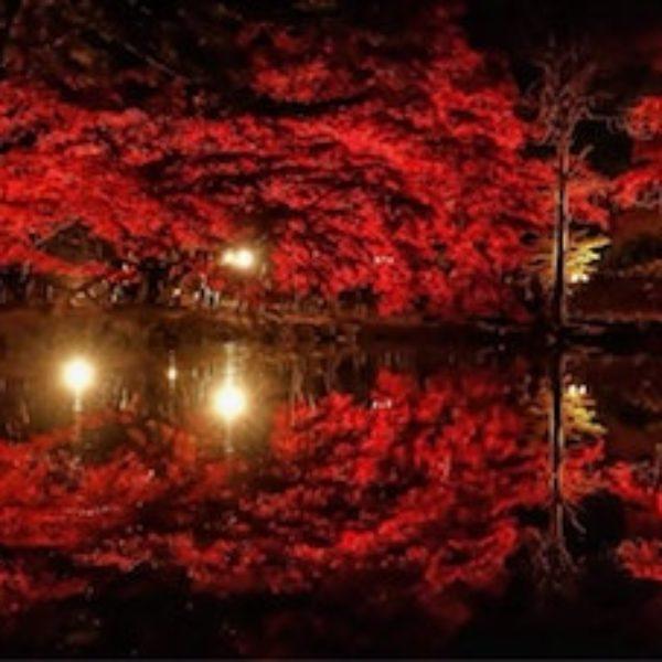 giardino giapponese rosso