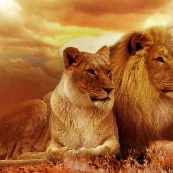 lion-safari-afika-landscape-40756