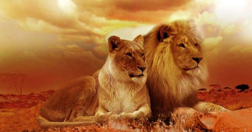 San Valentino in versione wild con un safari in Africa indimenticabile