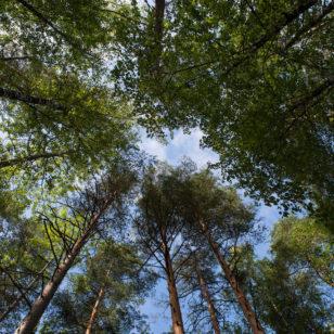 f0008-il-mondo-verticale-nel-teijo-national-park-ph-vgiannella