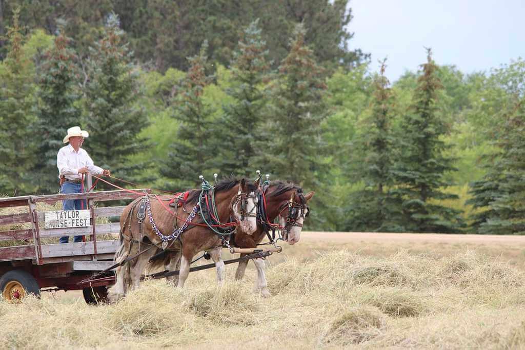 horses-3092741_960_720