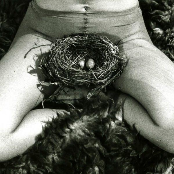 3. BJ_Nest, 1979-2 (1)