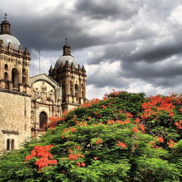 800px-Florecer_en_Oaxaca