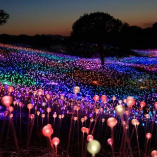 field-of-light-installation-bruce-munro